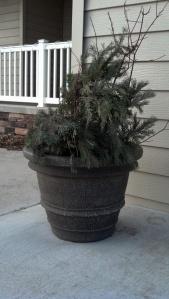 spruce pot -1