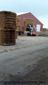 Nick uses the Bobcat to unload all the big squares of straw.