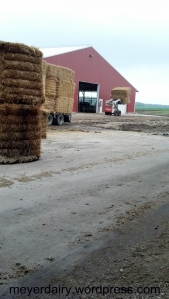 All the straw is stacked in our shed to keep it dry until we are ready to use it.